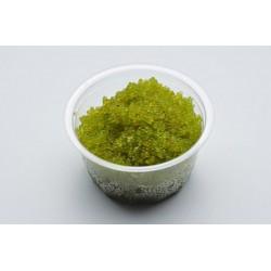 Икра Masago зеленая